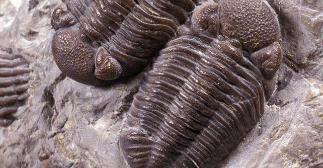 основи палеонтології