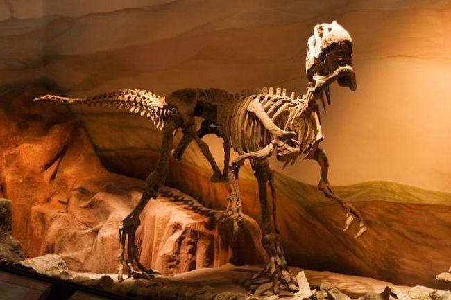 наука палеонтологія вивчає