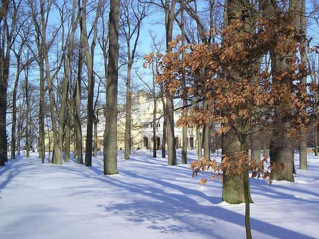 Фото - Парки Санкт-Петербурга: де погуляти взимку з дитиною і з собакою