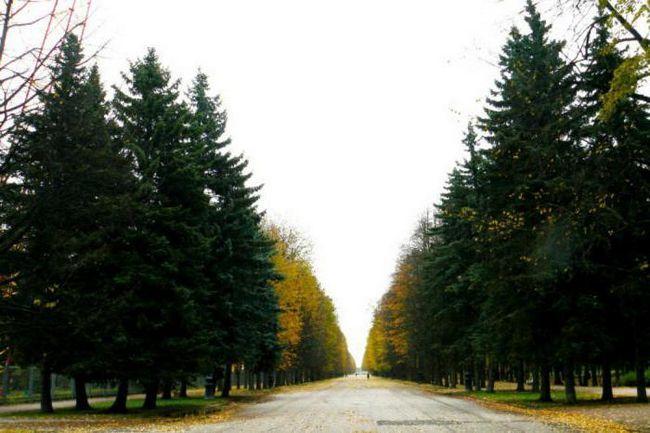 парки санкт петербурга де погуляти взимку