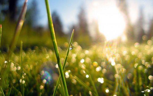чому з'являється роса на траві