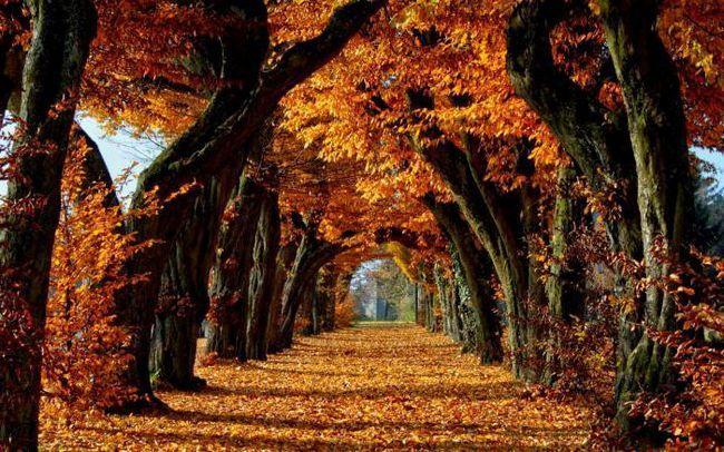 природа восени