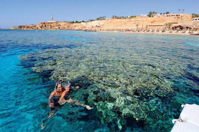 reef oasis beach resort 5 фото