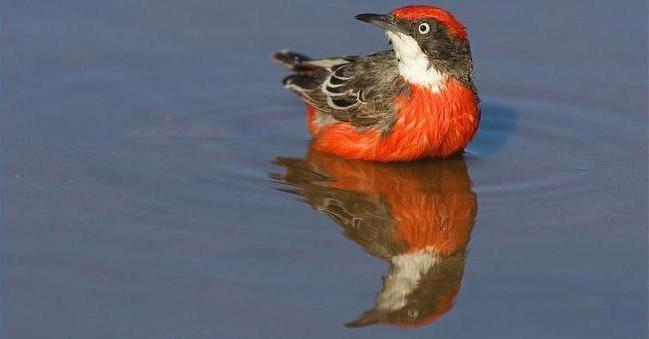 Фото - Найкрасивіші птахи миру