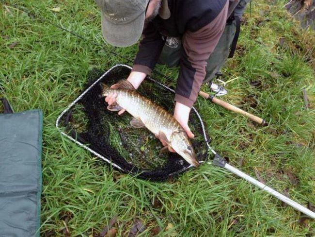 Риболовля в червні на щуку