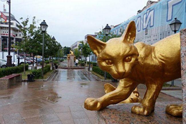Сквер сибірських кішок тюмень