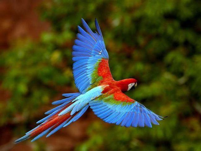 Фото - Будова пера птиці. Типи пір'я