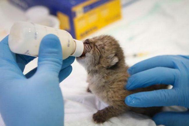Фото - В якій ветеринарній клініці в Орлі лікувати домашнього вихованця? Ветеринарні клініки в Орлі