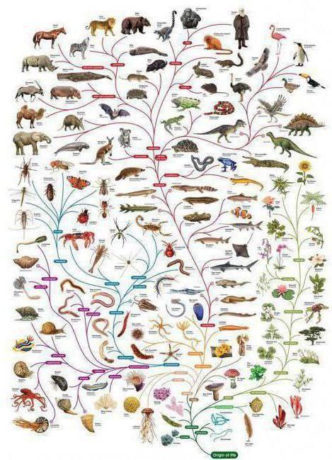 який внесок в біологію вніс дарвін