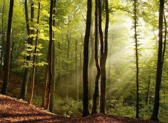 Фото - Загадки про дерева для дітей та їх батьків