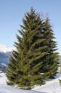 загадки про дерева з відповідями