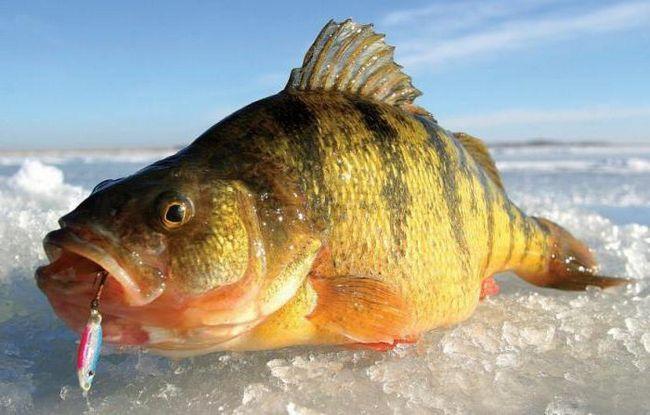 Фото - Зимова риболовля по першому льоду: опис, особливості та рекомендації