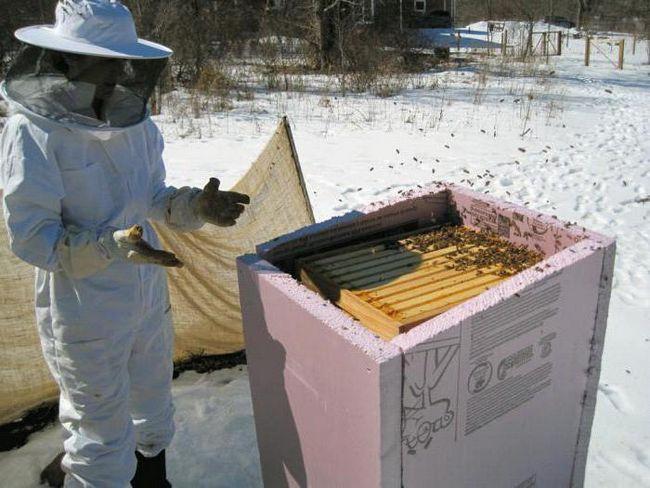 Фото - Зимівля бджіл на вулиці в різних регіонах Росії. Підготовка бджіл до зимівлі на вулиці