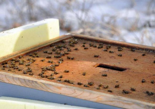 зимівля бджіл на вулиці на урале