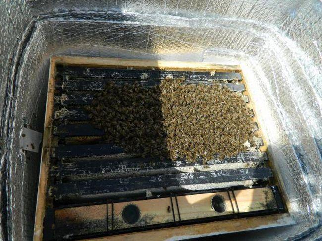 як готувати бджіл до зимівлі на вулиці
